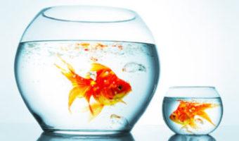 La lezione del pesce rosso
